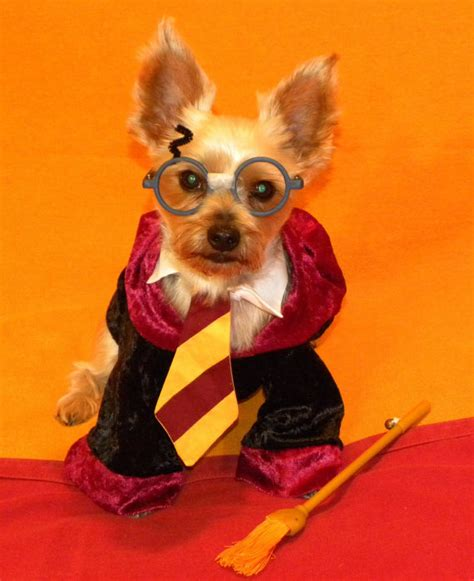 harry potter dog 20 dogs who can t get enough harry potter a little bit funny