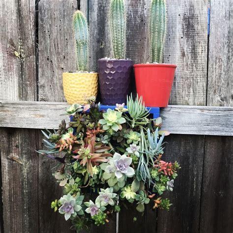 51 best pasadena back house succulents images on
