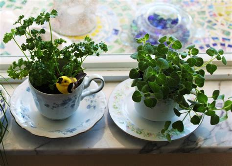 Saucers For Planters by 2 Teacup Cup And Saucer Planters For Windowsill Herbs