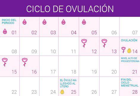 Calendario De Ovulacion Y Dias Fertiles Calcular D 237 As F 233 Rtiles Embarazo10