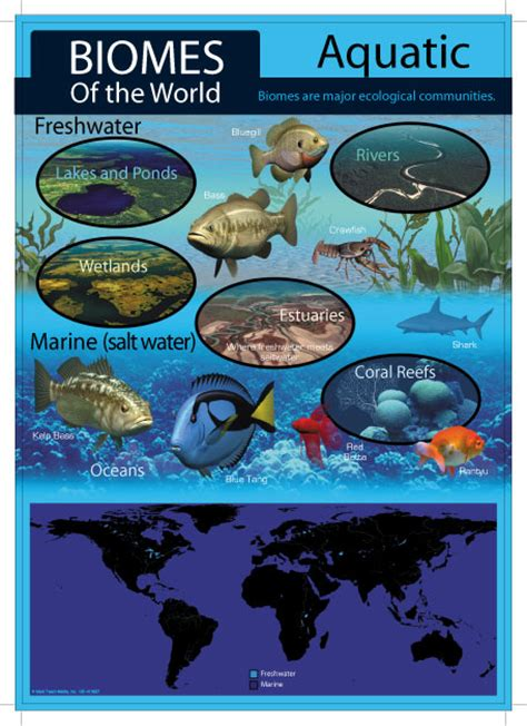 Freshwater Biome Essay by Marine And Freshwater Biomes Infographics Search Quot 7th Grade Science Semester One