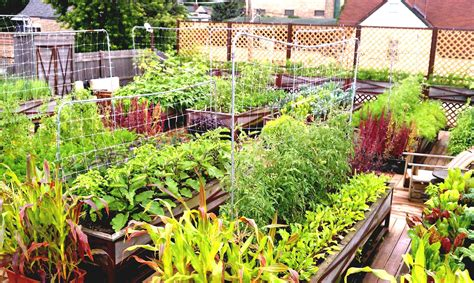 kitchen gardening ideas indian garden decoration ideas with home apartments andfortable how to rooftop on decor