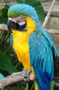 blue and gold macaw birds of a feather flock together