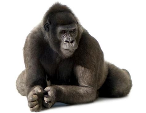 imagenes animales jpg lista de animales vertebrados e invertebrados batanga
