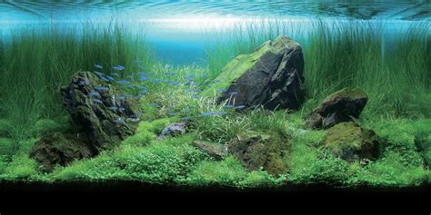 Aquascape Aquarium by Aquatics Beginners Guide To Aquascaping