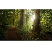Forest Path Sunlight Trees Green Shrubs Nature