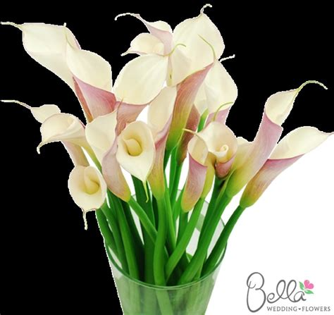 tall night table calla free shipping 7 best bulk calla lilies images on pinterest calla