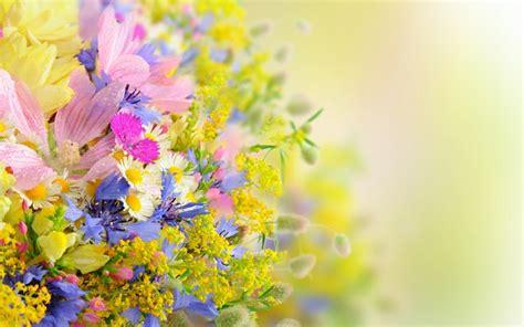 hd themes of flowers flower windows 10 theme themepack me