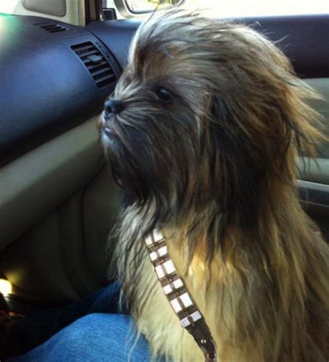 chewbacca puppy i ve been collecting wars themed dogs katerussell co uk