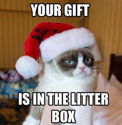 Xmas Meme - animal christmas funny cats