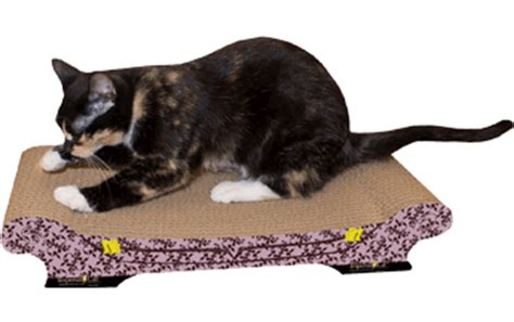 cat scratching couch solution imperial cat modern cat scratchers and scratching pads