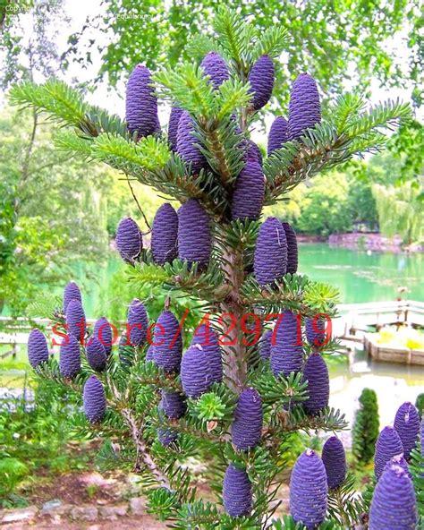 grossista fiori acquista all ingrosso alberi fiori viola da