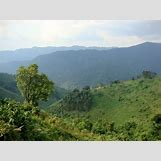 Mountain Gorilla Habitat   720 x 540 jpeg 86kB