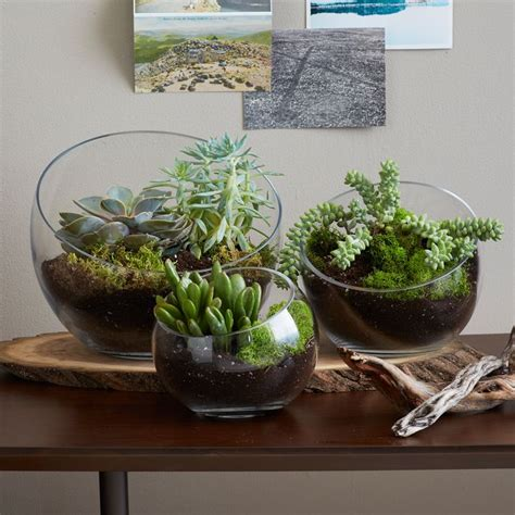 Handmade Terrariums - how to make a s day terrarium