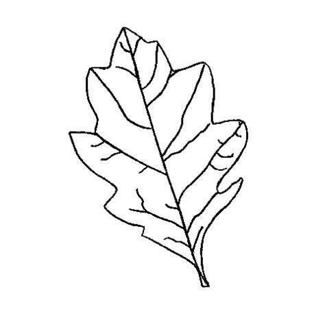 oak leaf template oak leaf stencil clipart best