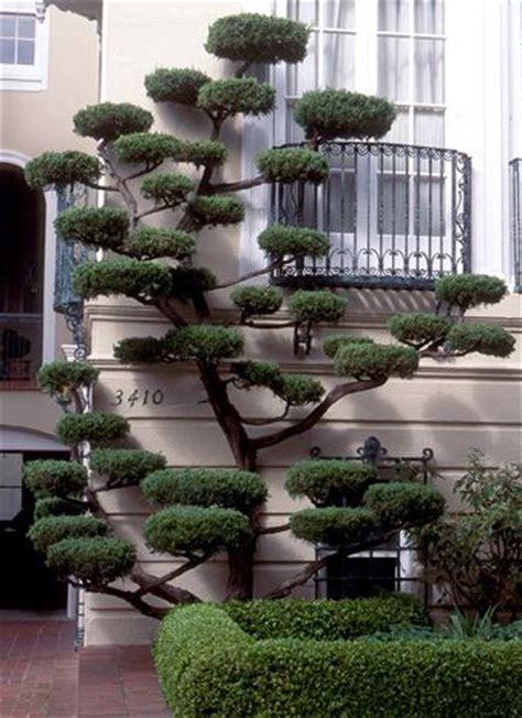 Jardinage Chez Particulier by Arbres Nuages Japonais Acheter Vos Arbres Chez Le