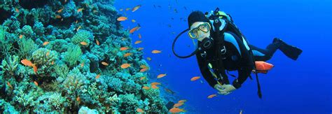 dive holidays sea diving holidays scuba diving holidays in the