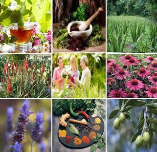 Organic Aid Tea Teh Untuk Pencernaan lasvegas