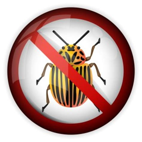 professional bed bug treatment man douses couch in gasoline to get rid of bed bugs kill bed bugs with heat treatment