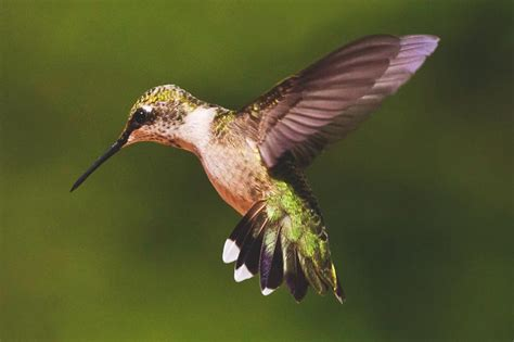 imagenes de casitas y bebedero p colibri con botellas descartables 191 d 243 nde vive el colibr 237