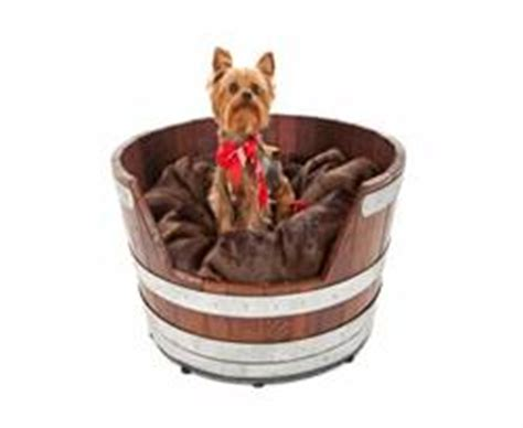 how much are teacup yorkies image gallery miniature yorkie