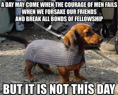 may day meme the animal of our favourite series hodderscape