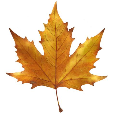 leaves maple leaf 3d model
