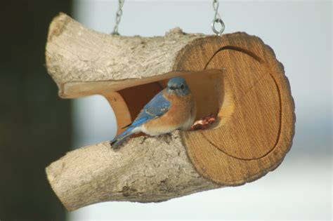peterson bluebird house plans pdf peterson bluebird house plans pdf house style ideas