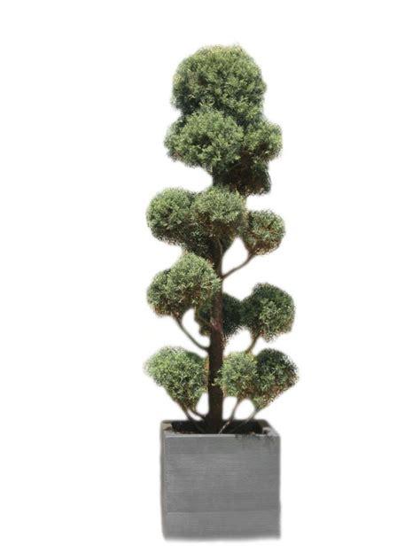 oltre il giardino grassobbio noleggio cupressus macrocarpa oltreilgiardino