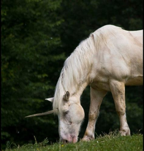 imagenes de unicornios de verdad fotos de unicornios reales auto design tech