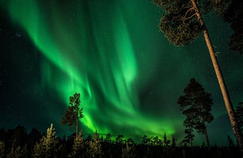 finland night sky star northern lights forest tree hd