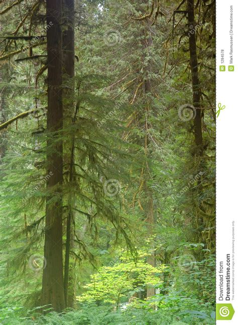 pacific northwest design royalty free stock photos image pacific northwest forest royalty free stock photos image