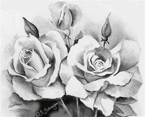 Drawing Roses by Awesome Drawings The Wondrous Pics
