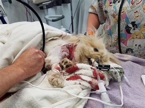 dog attack news dog daycare dog boarding and dog woman devastated after her dog was fatally mauled at