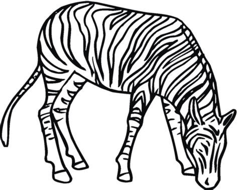 imagenes de cebras para dibujar faciles dibujo de cebra pastando para colorear dibujos para