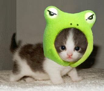 cute kitten photo by sweet black candy photobucket