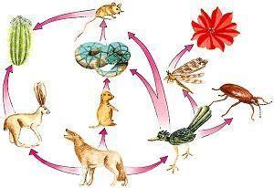 significado de cadenas alimenticias definici 243 n de cadena alimenticia qu 233 es significado y