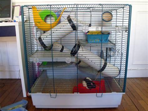 Hamac Pour Rat Fait Maison by Quelques Liens Utiles
