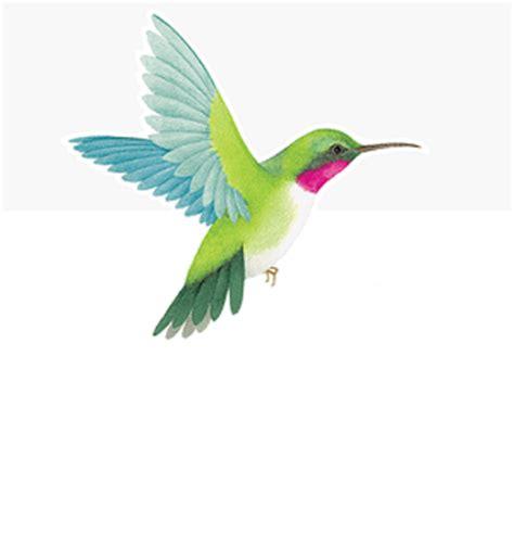 caspari hummingbird designer print die cut place cards