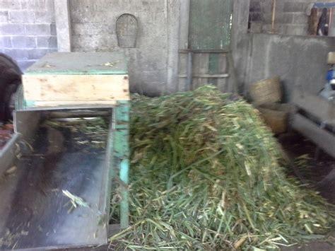 Mesin Pencacah Rumput Odot belajar dari peternakan sapi erwin oleh yunus