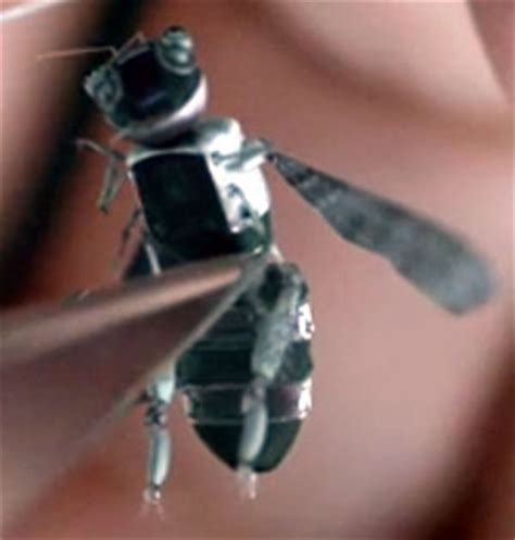 black mirror drone bees zpi weaponized bees a taste for honey black mirror