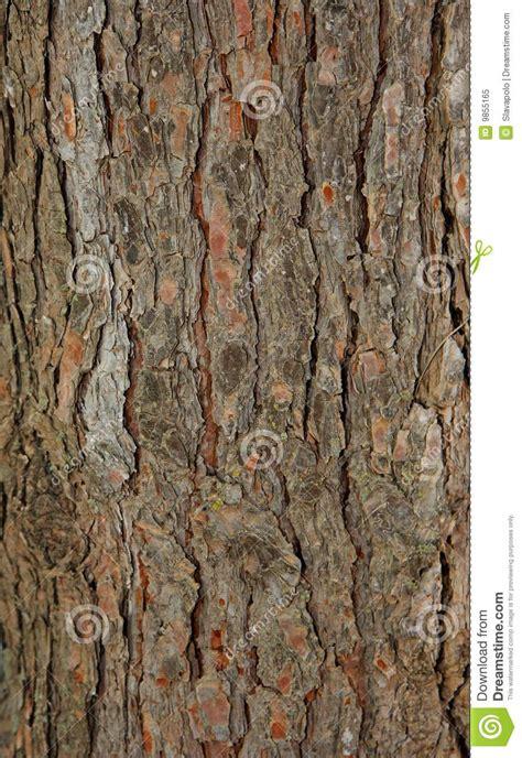 pinetree bark texture royalty free stock photo image