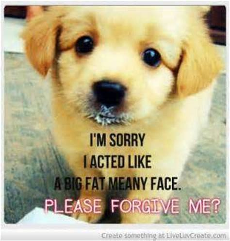 sorry puppy sorry quotes profile picture quotes