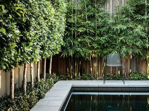 bambus sichtschutz pflanzen terrassen sichtschutz mit pflanzen neugierige blicke