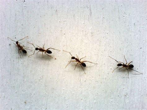 come eliminare le formiche dalla cucina come eliminare le formiche donna moderna