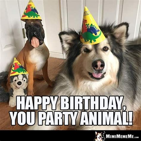 Party Animal Meme - 25 best ideas about happy birthday dog meme on pinterest
