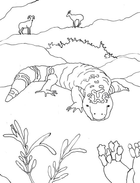 caroline arnold art and books gila monster coloring page
