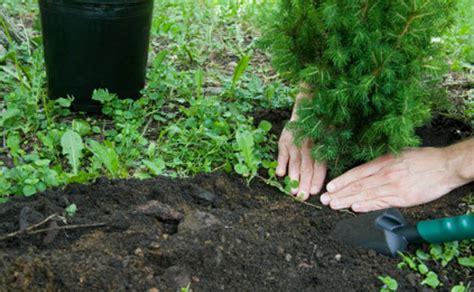 come piantare le in giardino come piantare un albero nel giardino i trucchi e i