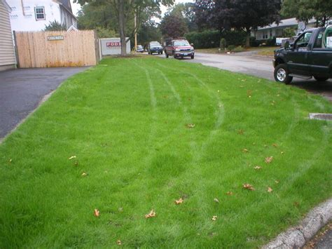 renovating a lawn in rhode island by always green