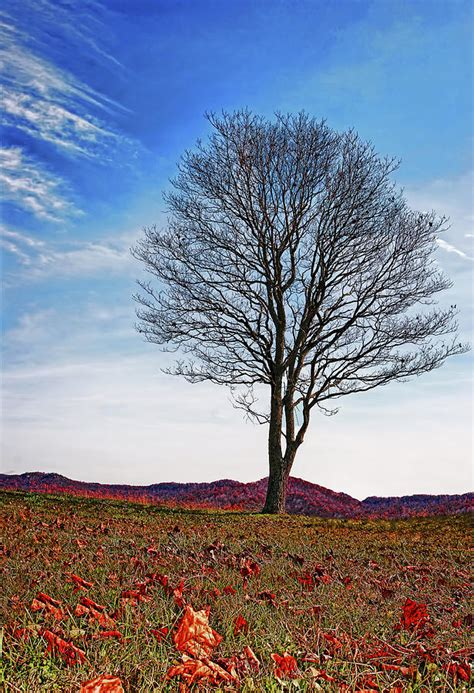 lone tree photograph by marcia colelli